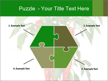 Chili pepper plant PowerPoint Templates - Slide 40