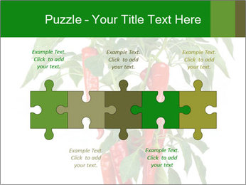 Chili pepper plant PowerPoint Templates - Slide 41