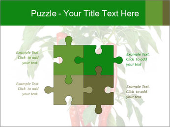 Chili pepper plant PowerPoint Templates - Slide 43