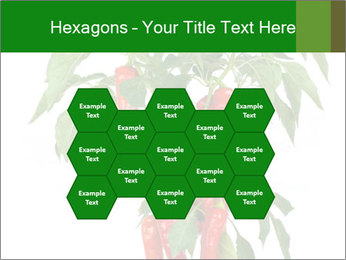 Chili pepper plant PowerPoint Templates - Slide 44