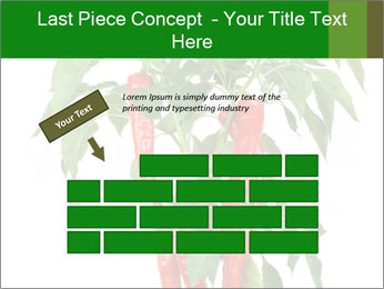 Chili pepper plant PowerPoint Templates - Slide 46