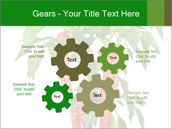 Chili pepper plant PowerPoint Templates - Slide 47