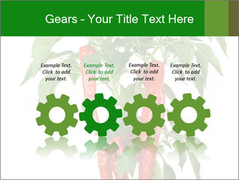 Chili pepper plant PowerPoint Templates - Slide 48
