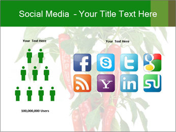 Chili pepper plant PowerPoint Templates - Slide 5