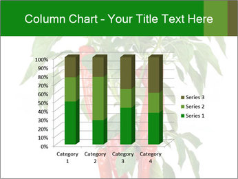 Chili pepper plant PowerPoint Templates - Slide 50