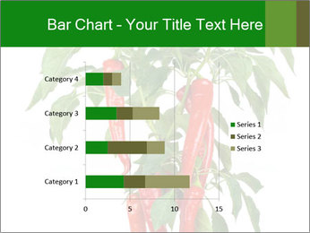 Chili pepper plant PowerPoint Templates - Slide 52