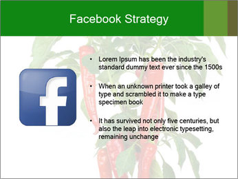 Chili pepper plant PowerPoint Templates - Slide 6