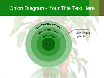 Chili pepper plant PowerPoint Templates - Slide 61