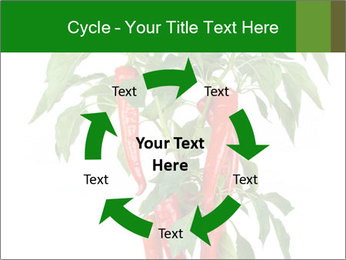 Chili pepper plant PowerPoint Templates - Slide 62