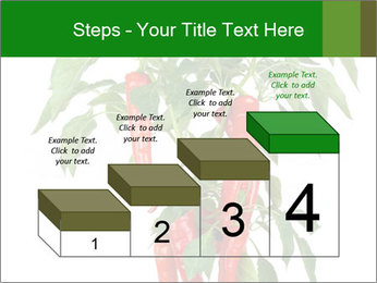 Chili pepper plant PowerPoint Templates - Slide 64