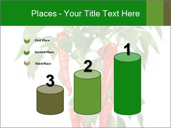Chili pepper plant PowerPoint Templates - Slide 65
