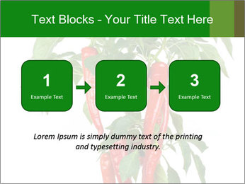 Chili pepper plant PowerPoint Templates - Slide 71