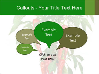 Chili pepper plant PowerPoint Templates - Slide 73