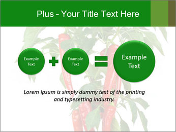 Chili pepper plant PowerPoint Templates - Slide 75