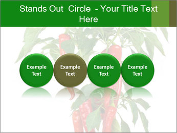 Chili pepper plant PowerPoint Templates - Slide 76