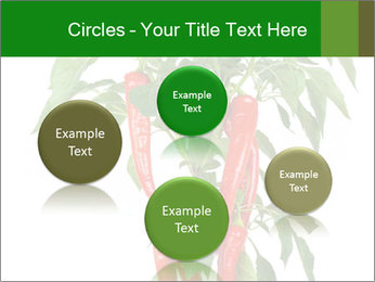 Chili pepper plant PowerPoint Templates - Slide 77