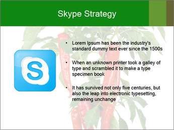 Chili pepper plant PowerPoint Templates - Slide 8