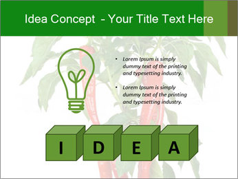 Chili pepper plant PowerPoint Templates - Slide 80