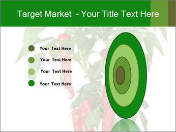 Chili pepper plant PowerPoint Templates - Slide 84