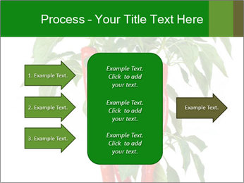 Chili pepper plant PowerPoint Templates - Slide 85