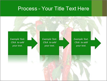 Chili pepper plant PowerPoint Templates - Slide 88