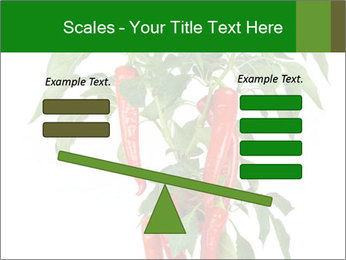 Chili pepper plant PowerPoint Templates - Slide 89