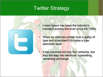 Chili pepper plant PowerPoint Templates - Slide 9