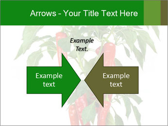 Chili pepper plant PowerPoint Templates - Slide 90
