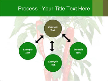 Chili pepper plant PowerPoint Templates - Slide 91