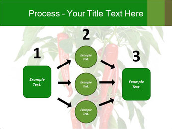 Chili pepper plant PowerPoint Templates - Slide 92