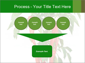 Chili pepper plant PowerPoint Templates - Slide 93