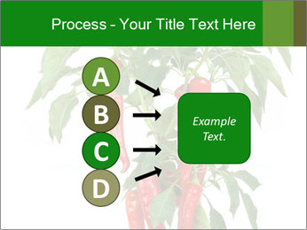 Chili pepper plant PowerPoint Templates - Slide 94