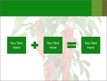 Chili pepper plant PowerPoint Templates - Slide 95