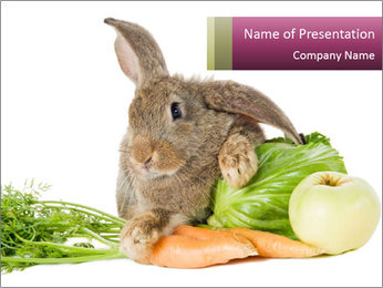 Bunny with fresh vegetables carrot cabbage and apple isolated PowerPoint Template