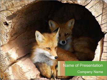 Furry Fox PowerPoint Template