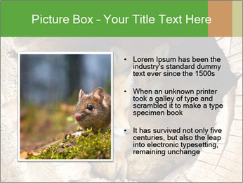 Furry Fox PowerPoint Template - Slide 13