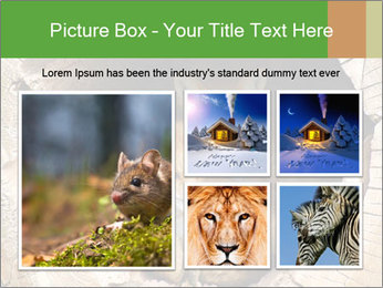 Furry Fox PowerPoint Template - Slide 19