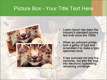 Furry Fox PowerPoint Template - Slide 20