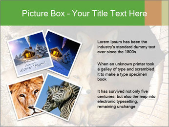 Furry Fox PowerPoint Template - Slide 23