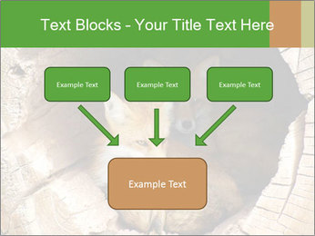 Furry Fox PowerPoint Templates - Slide 70