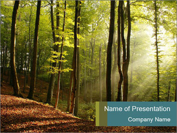 Backlight In Forest PowerPoint Template - Slide 1