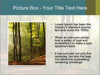 Backlight In Forest PowerPoint Template - Slide 13