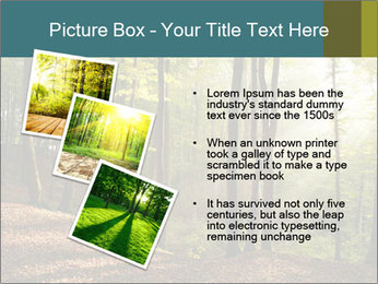 Backlight In Forest PowerPoint Template - Slide 17