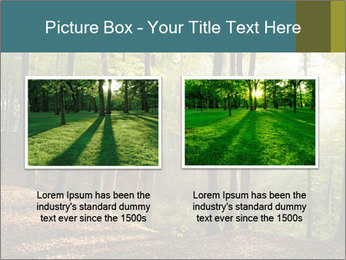 Backlight In Forest PowerPoint Template - Slide 18