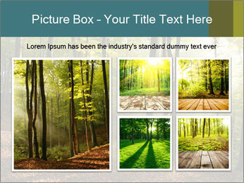 Backlight In Forest PowerPoint Template - Slide 19