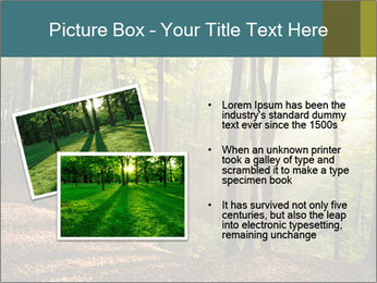 Backlight In Forest PowerPoint Template - Slide 20
