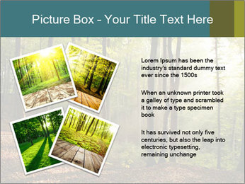 Backlight In Forest PowerPoint Template - Slide 23
