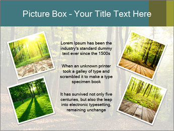 Backlight In Forest PowerPoint Template - Slide 24