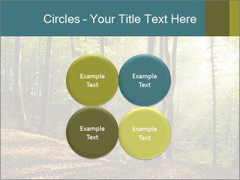 Backlight In Forest PowerPoint Template - Slide 38