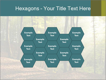 Backlight In Forest PowerPoint Template - Slide 44